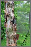 TreeSecondFramed by JKittredge