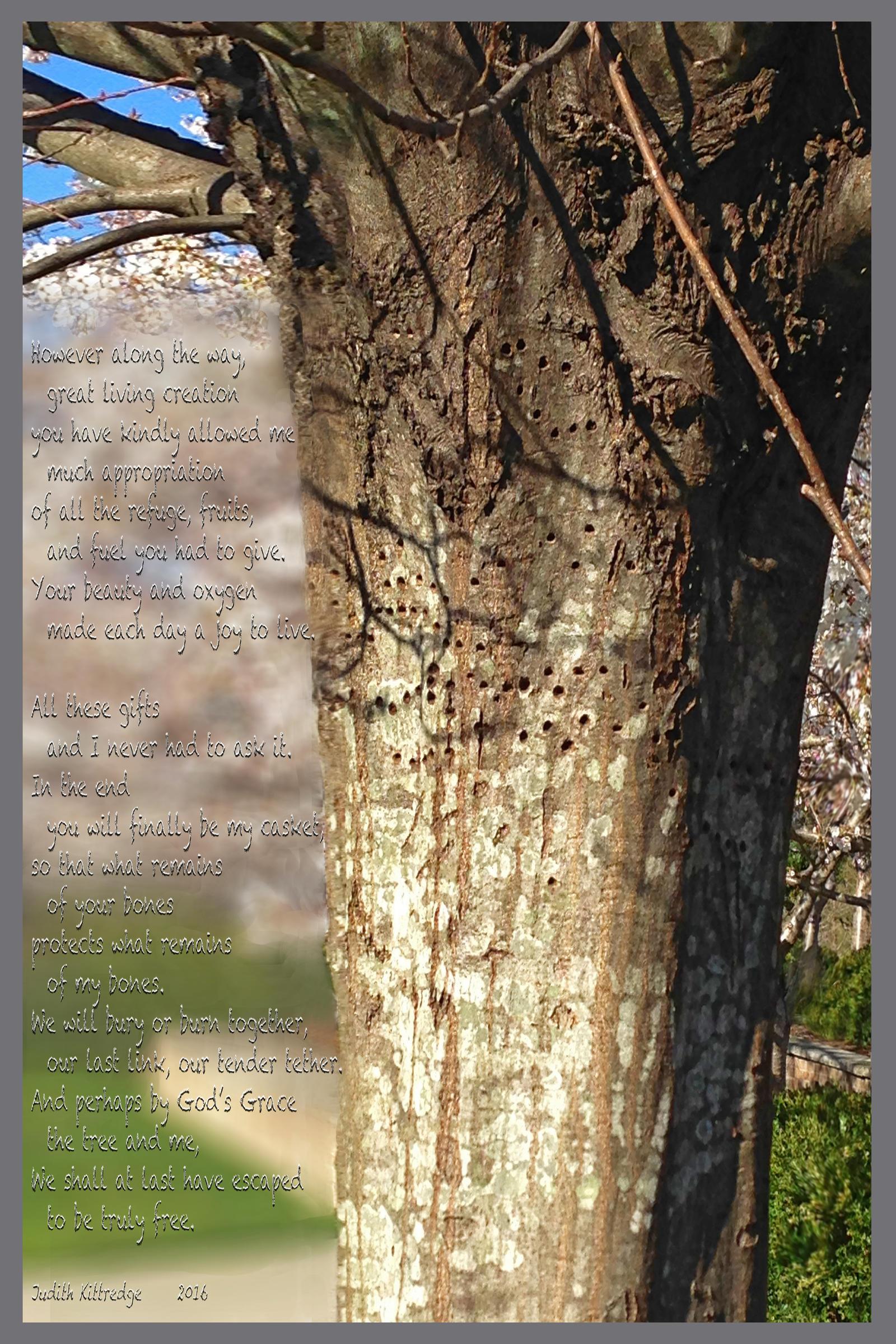 TreeThirdFramed by JKittredge