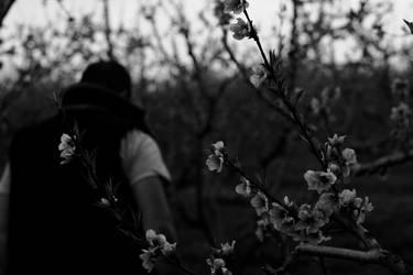 noir by starlit-sky
