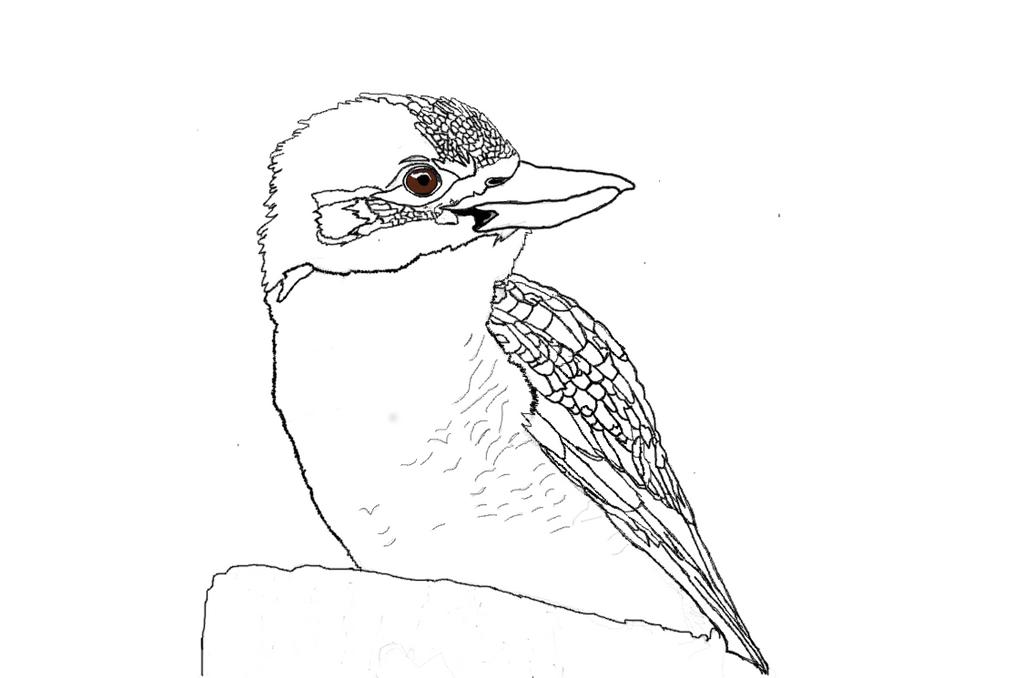 Kookaburra by The-Art-Wolf