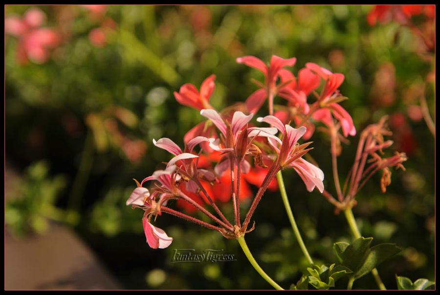 Pink Flowers by Fantasytigress
