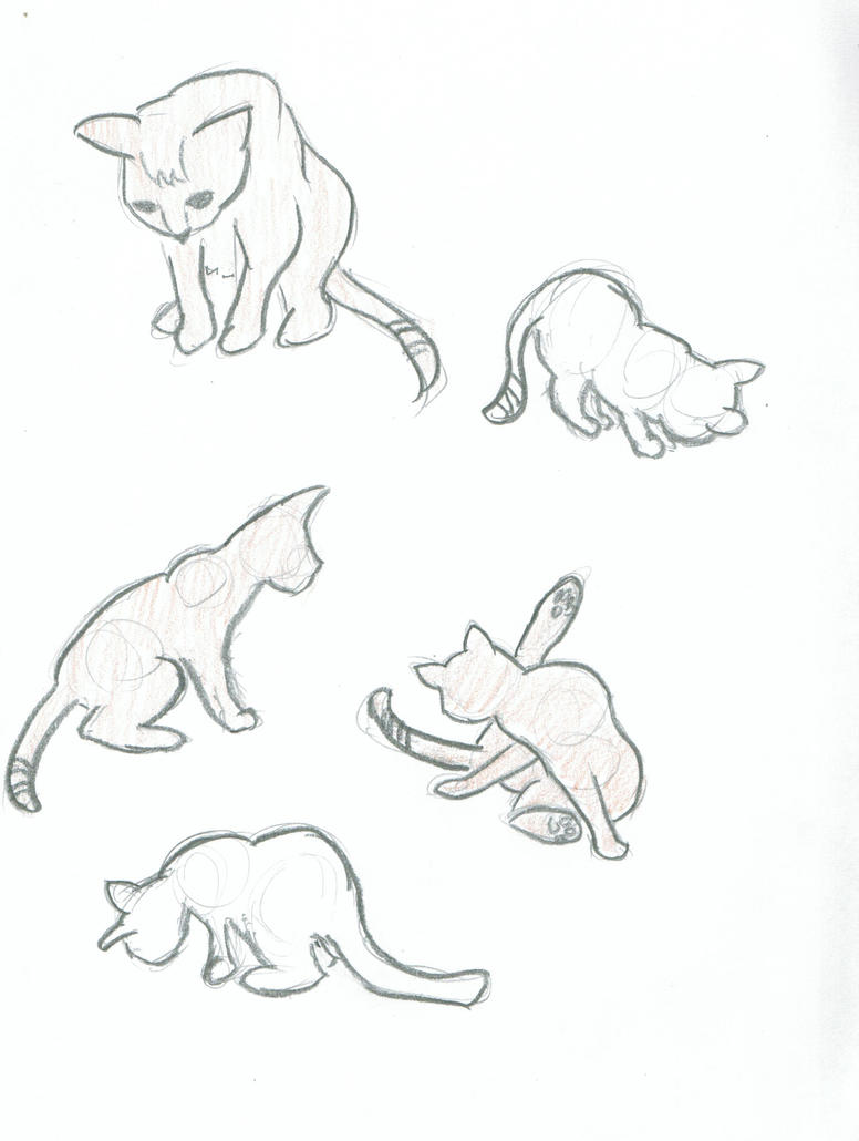 Cat Sketches by Awesomesaucical