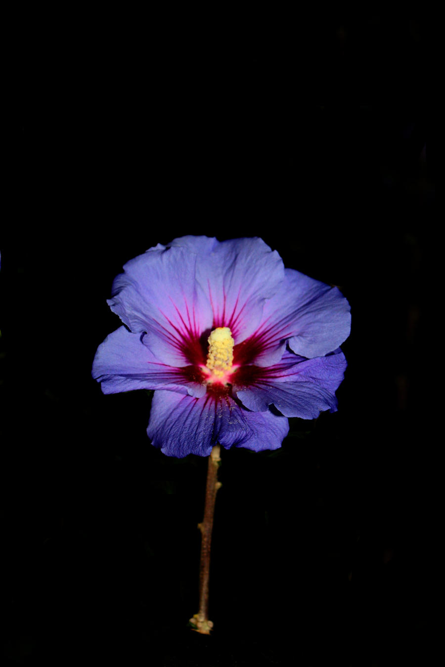 Midnight Flowers | WritersCafe.org | The Online Writing Community