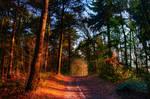 .: Woodland Way :.