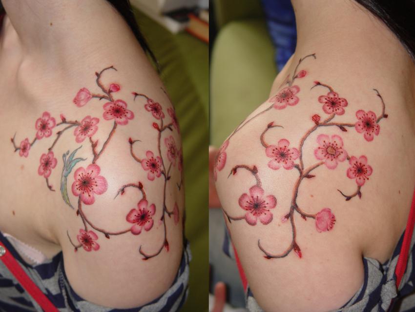 cherry blossoms by jangotat2