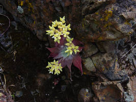 Flowering Plant on a Rock by sean335