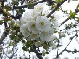 Flowering Tree by sean335