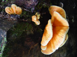 Orange Fungus by sean335