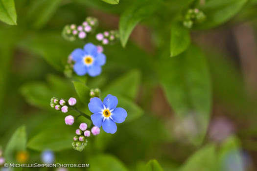 Forget Me Nots 2013