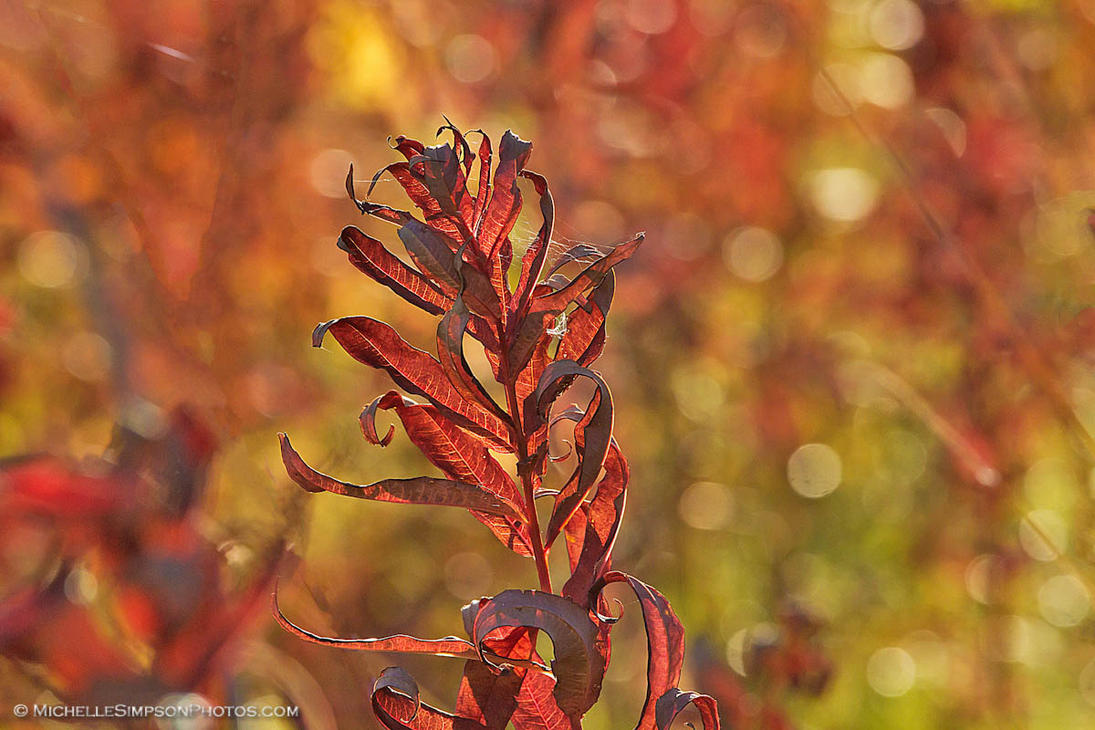 Tendrils of Flame by MSimpsonPhotos