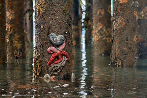 Starfish Wishes by MSimpsonPhotos