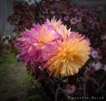 Autumn Flower by AlexBlood