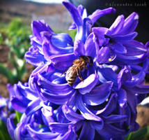 Busy Bee by AlexBlood