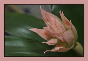 lady pink by liviugherman