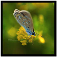 butterfly_02 by liviugherman