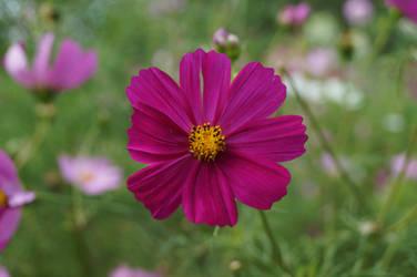 Pink flower by Doris1991