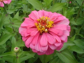 Flora by twiggy101