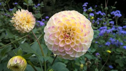Flora II by twiggy101