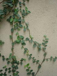 Ivy by twiggy101