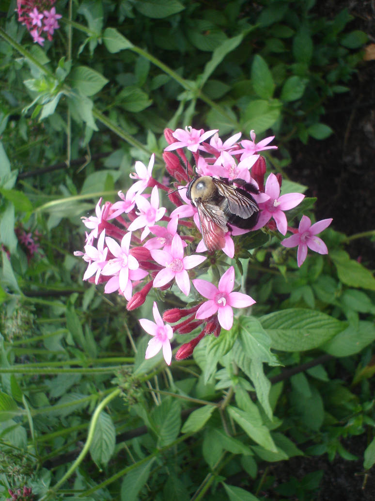 Bee at Rest by twiggy101