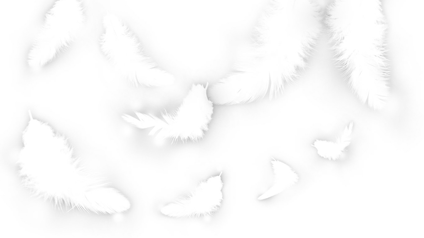 deviantART: More Like White Feather Wallpaper by Rohelion