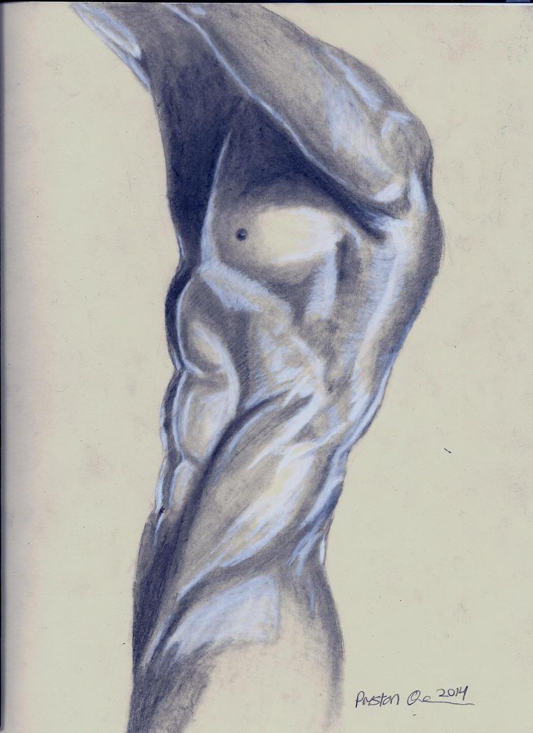 Anatomy drawing in graphite 2014 by Psychopen on DeviantArt