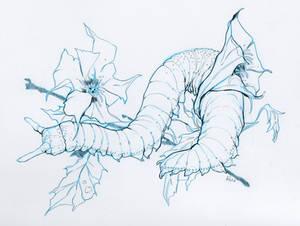 Velvet Worm in Jimson Weed