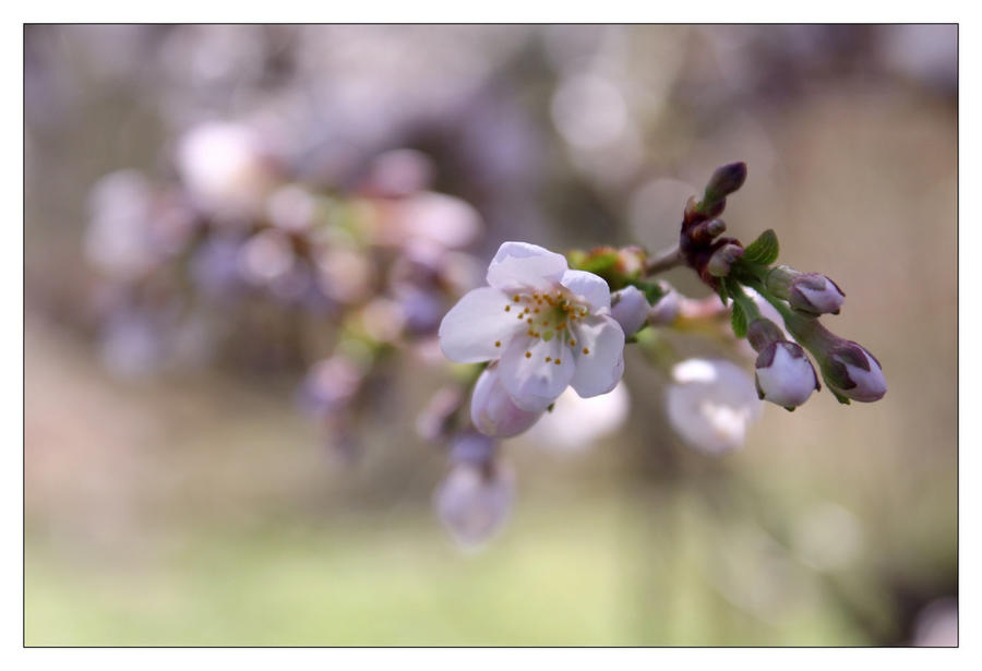 Spring 39 by hamti