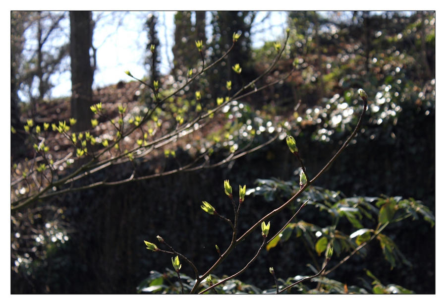 Young branches III by hamti