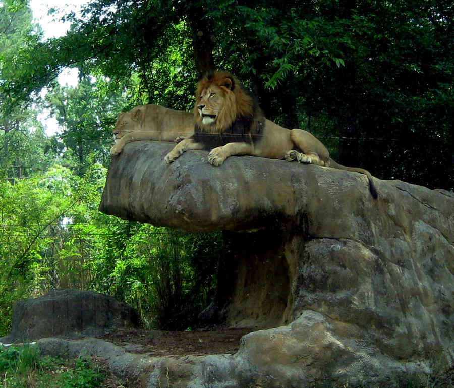 King of tha jungle by 3way