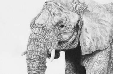 Elephant by martinkaspar