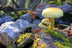Autumn life