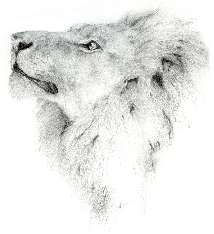 Leo by jivu