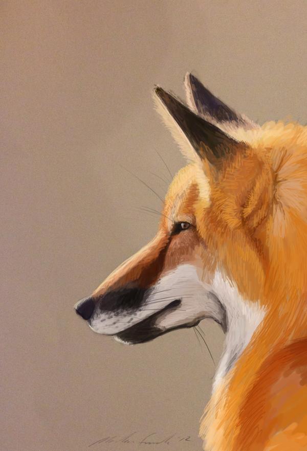 Fox by Maeocy