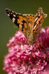 Flutter by MoonLament