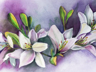 White Watercolor Flowers by aladyx