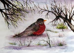 Early Spring Robin