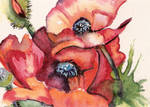 'Breath of 'Poppies'
