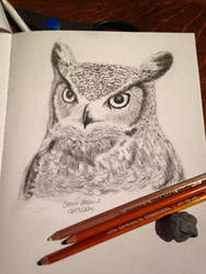 Owl in Charcoal