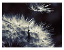 Make a Wish  II by xxFiveWords