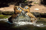 Tiger Play 1