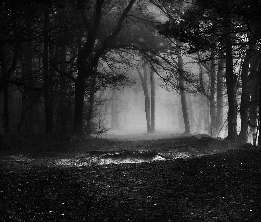 Sadness Forest By Justine1985 On Deviantart