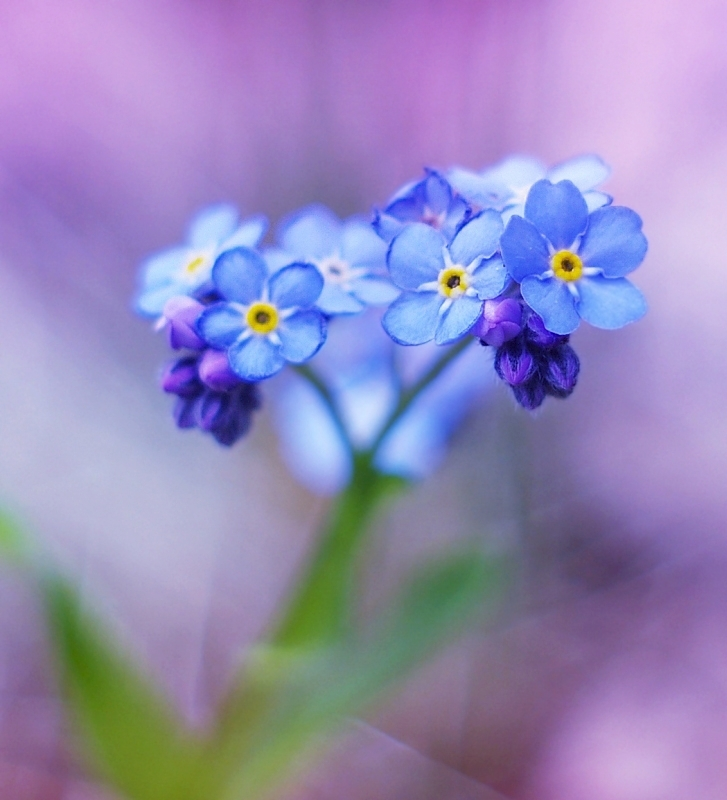 little blue flowers II by Justine1985