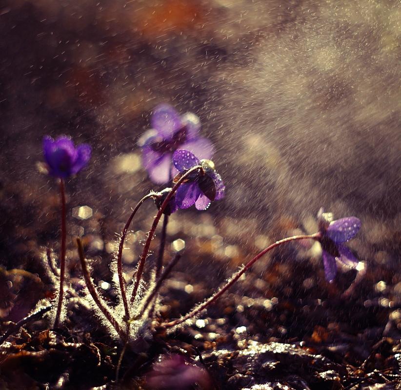 Shower Flower by Justine1985