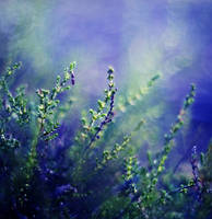 Green Heather by Justine1985