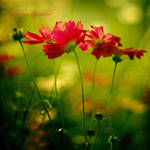 Red Flowers by Justine1985