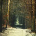 November Forest