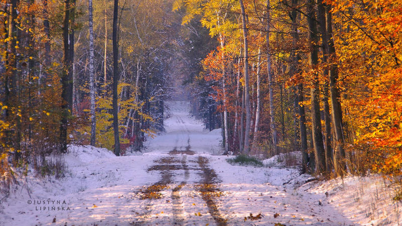 Autumn Winter Forest by Justine1985