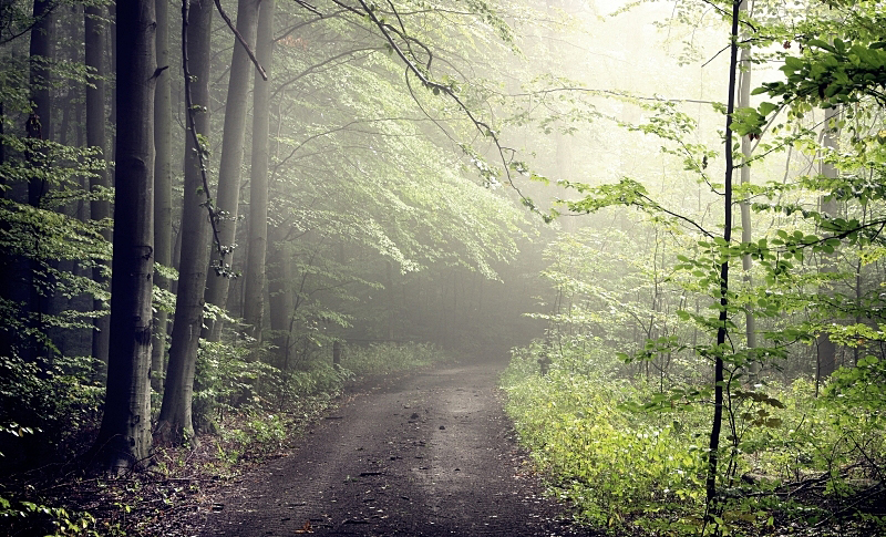 September Forest by Justine1985