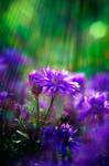 September Flower by Justine1985